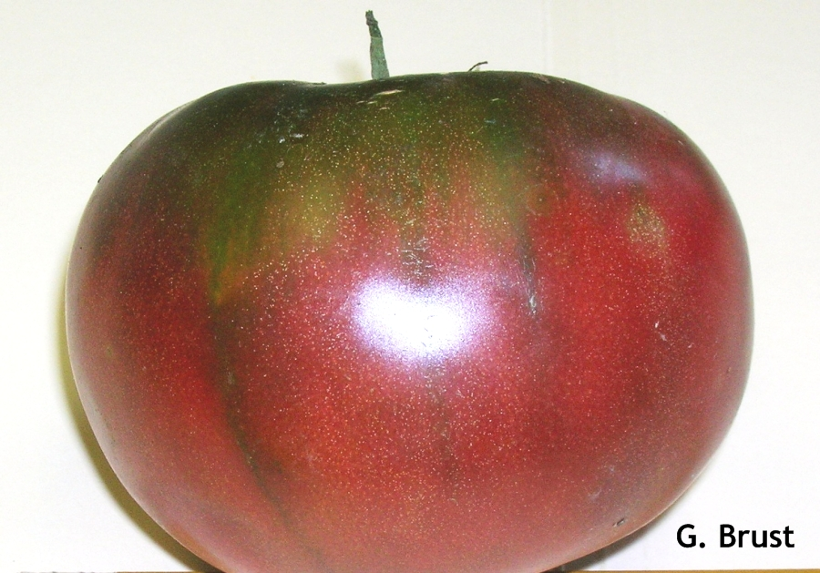 Blotchy Ripening Of Tomato Fruit Definition Contributing Factors