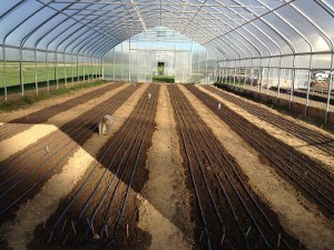 drip irrigation-resized