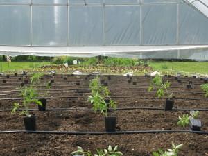farm2-application-2