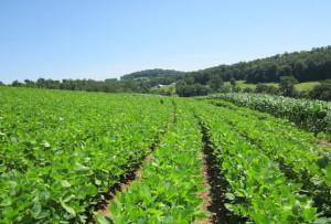 usda-bcsr-neohio-farm-july-15