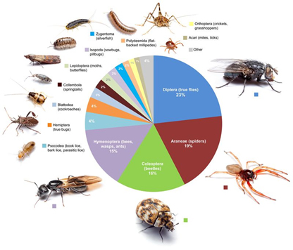 This graphic shows the proportional diversity of arthropod types across all of the rooms surveyed.