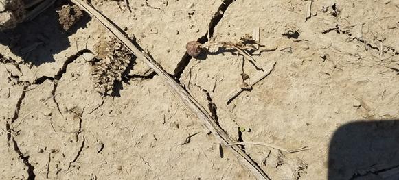 seedling disease