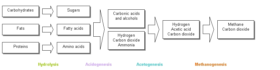 Stages_of_anaerobic_digestion