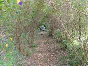 Path through Laureles Farm.