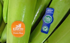Bananas labeled for sale at Whole Foods.