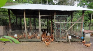 The chicken coop at the animal farm at Earth University.