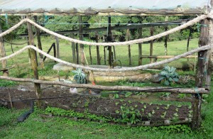 The vegetable garden at Laureles Farm.  Most meals featured  food that went directly from garden to plate.