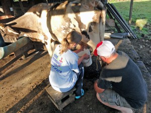 Fernando showed Carla how to milk a cow.