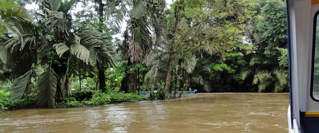 The boat ahead of us makes a hairpin turn on the river to Tortuguero.