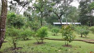 The grounds of Laguna Lodge.