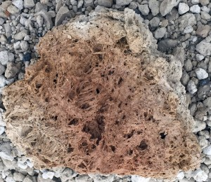 Inside a large piece of tephra from Hekla.