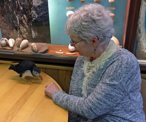 Toti the rescue puffin at Sæheimar Natural History Museum