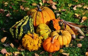 pumpkins piled on ground