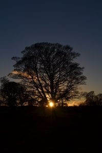sunset behind large tree