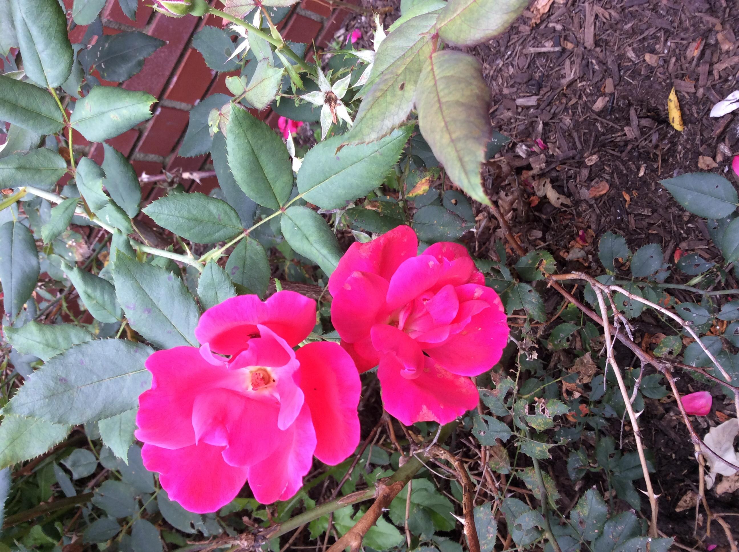 Practice Identifying Plants Ohio Plants