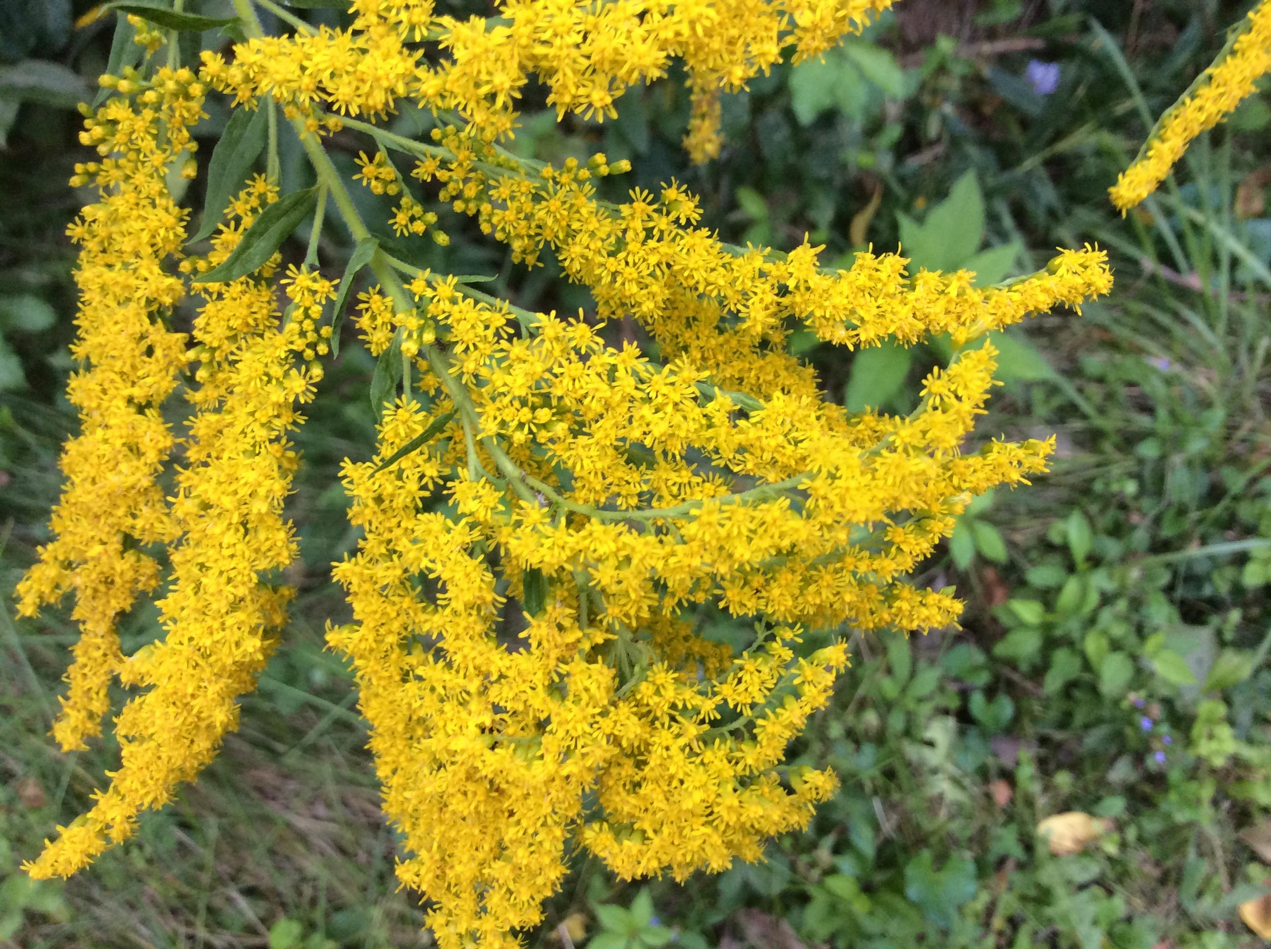 Ohio Plants