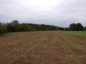 Green Farm2