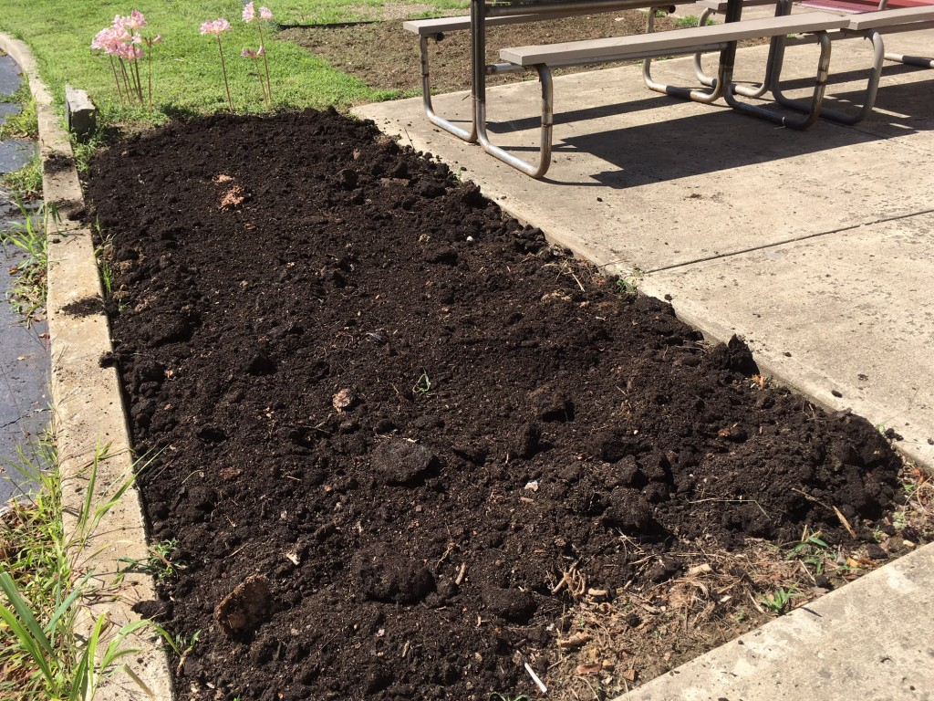 cleared, composted and ready to plant