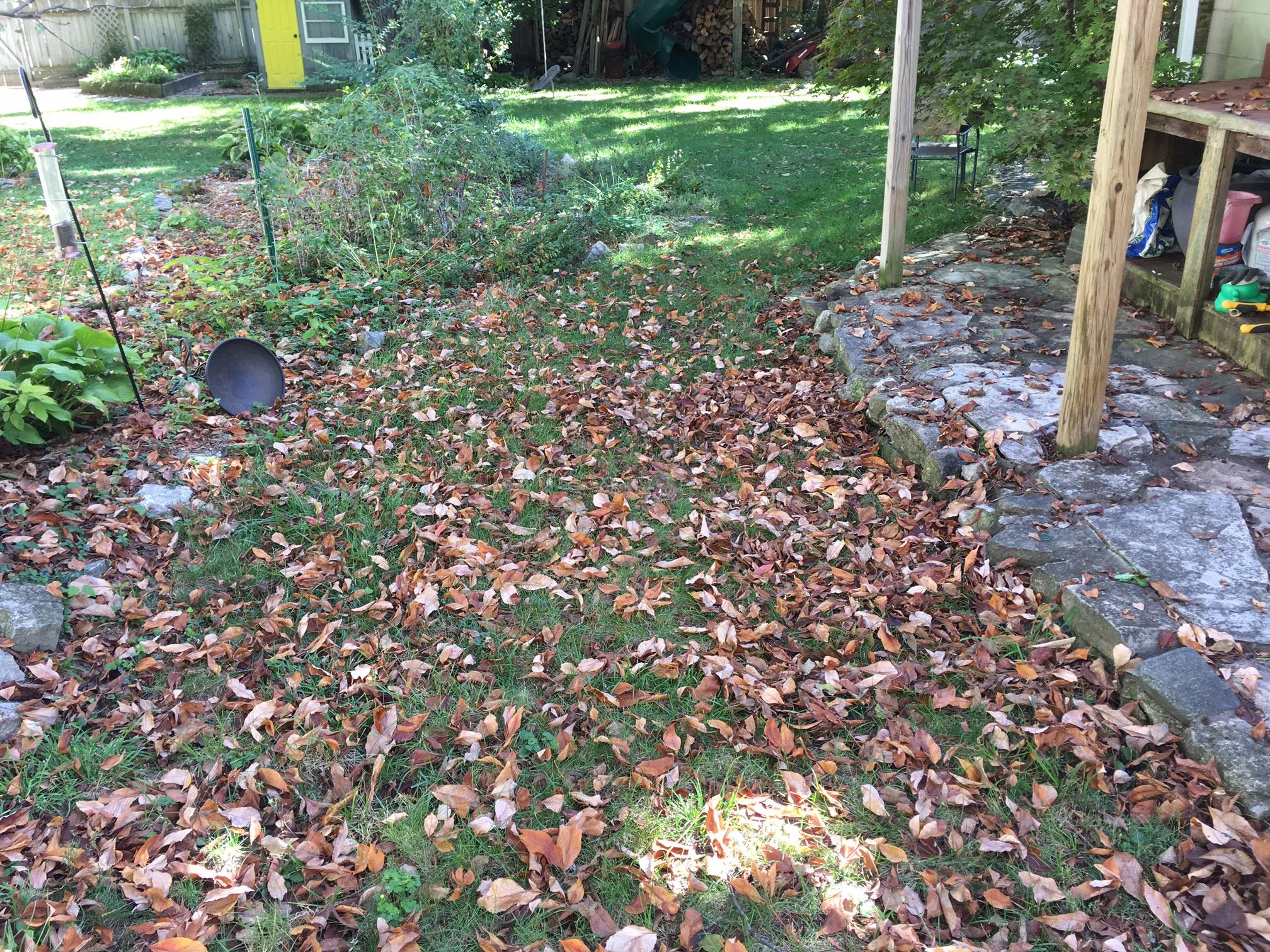 My Take On Fall Lawn Care Talking Hocking