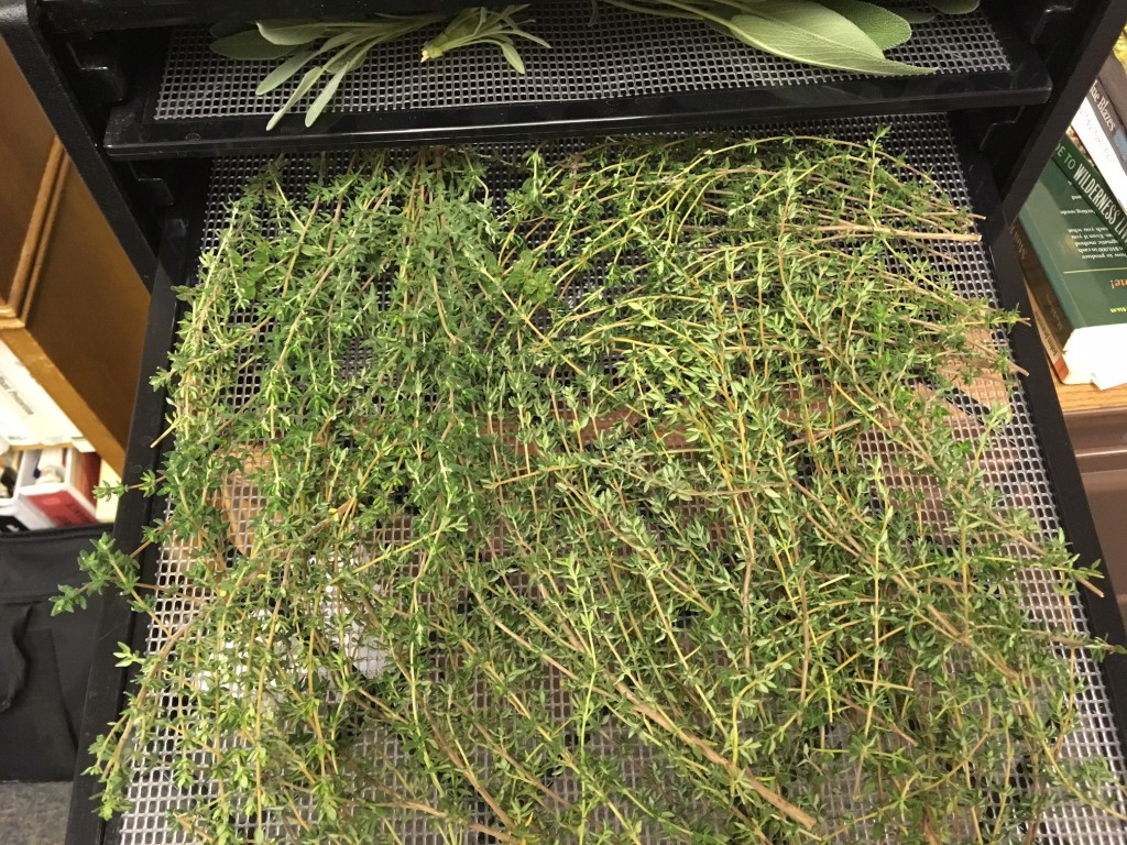 Thyme - leaves kept on stems works best
