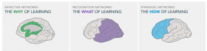 UDL principles are based on cognitive neuroscience