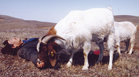Scene from Liu Hao's <em>Two Great Sheep</em>