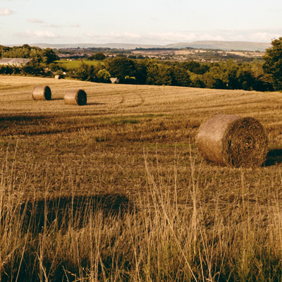 bales of hay in a field