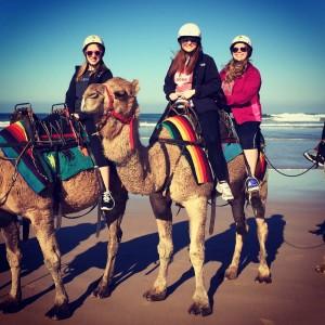Allie Stevens Camel