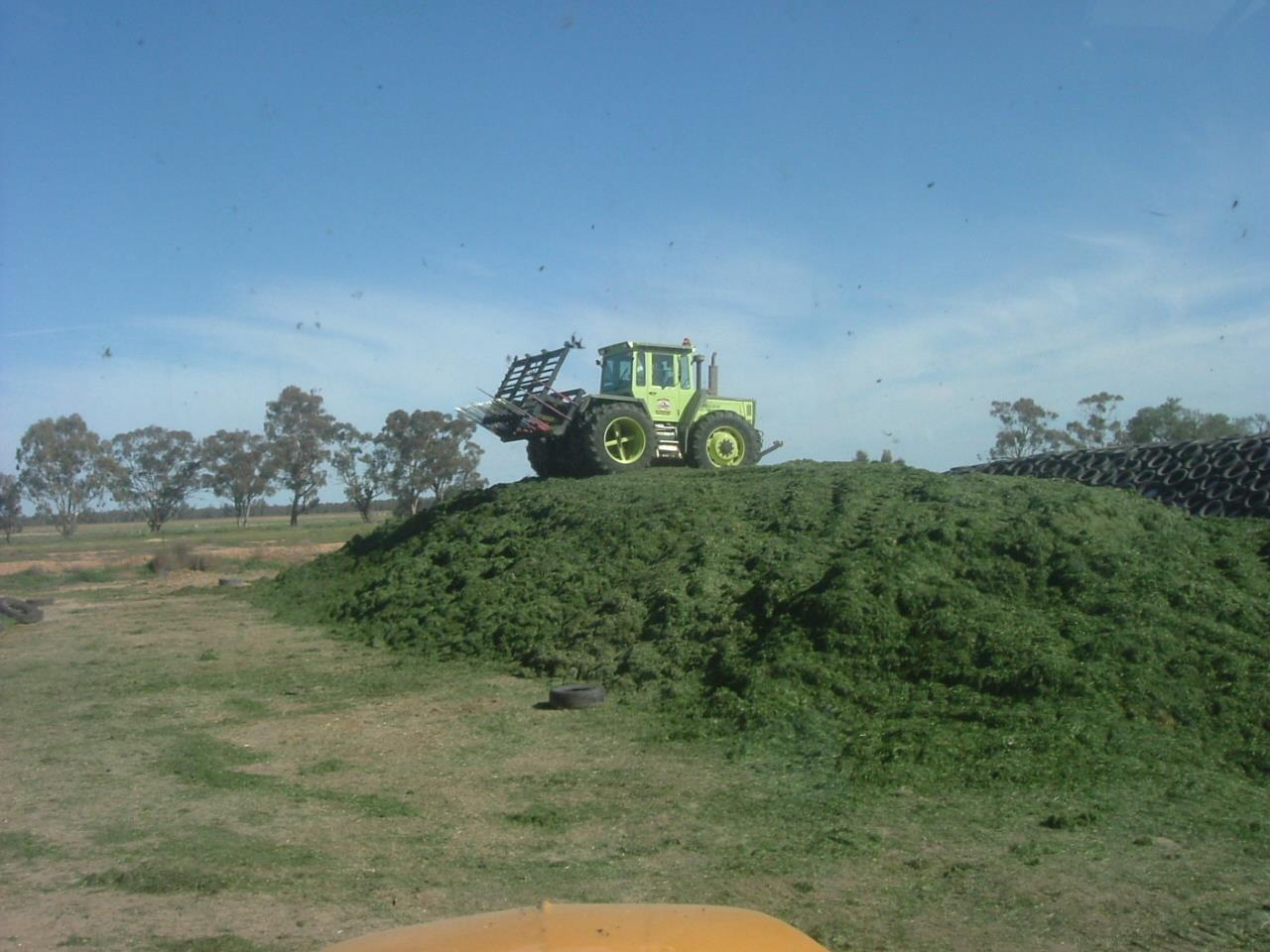 Mixing Corn and Soybeans in Food Plots - Quality Deer Management ...