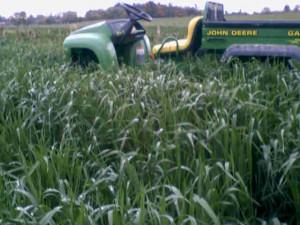 oats102405