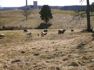 Stockpiled field in February