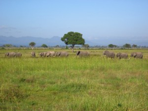 And see herds of elephants!