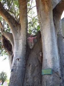Where you can climb baobab trees!