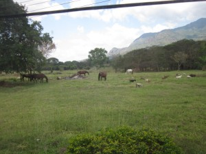 View from the lab this week: horses and goats