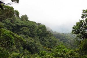 santa-elena-reserve-look-point