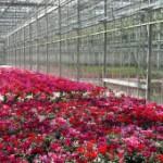 gh-flowers