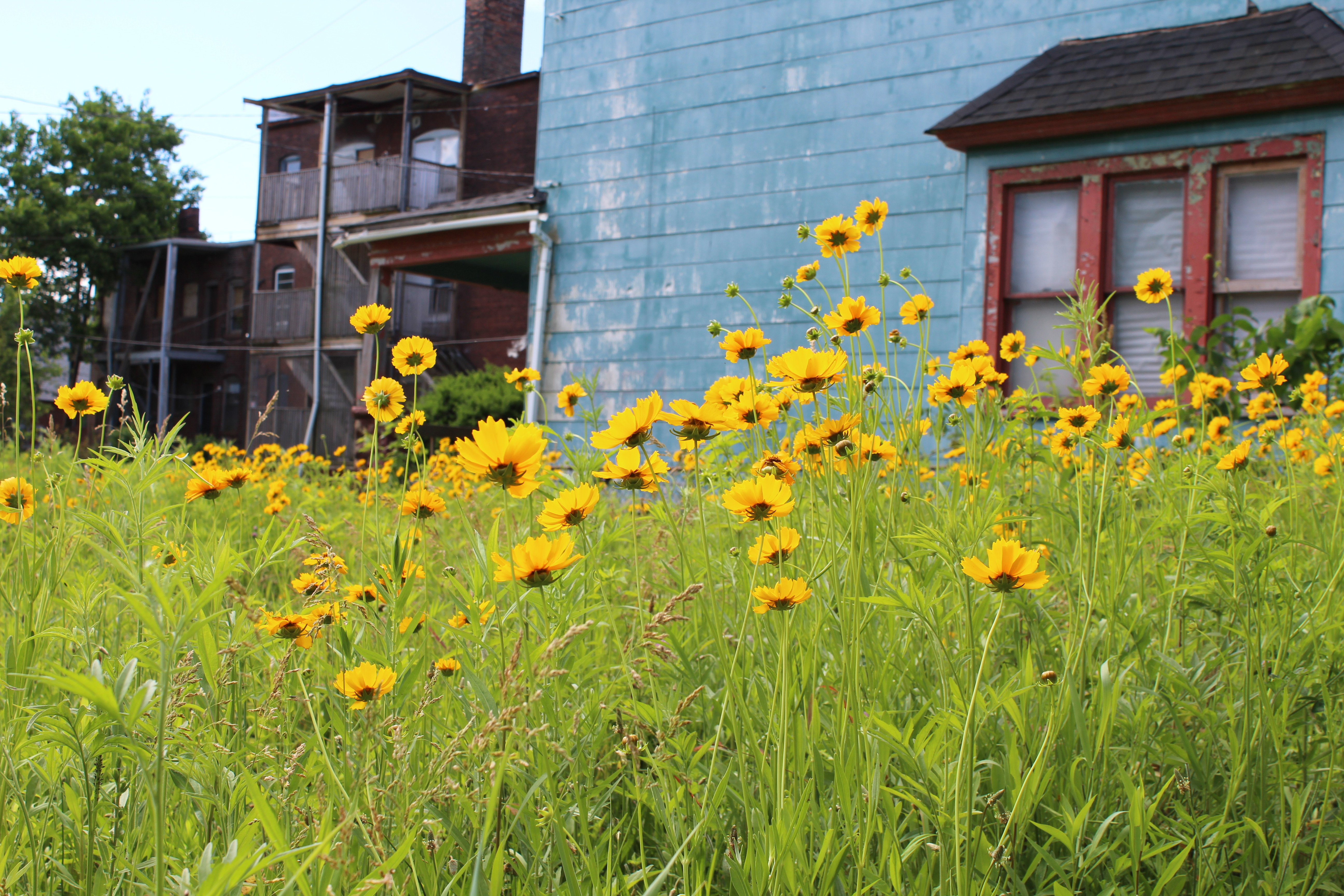 Cleveland Pocket Prairie Project