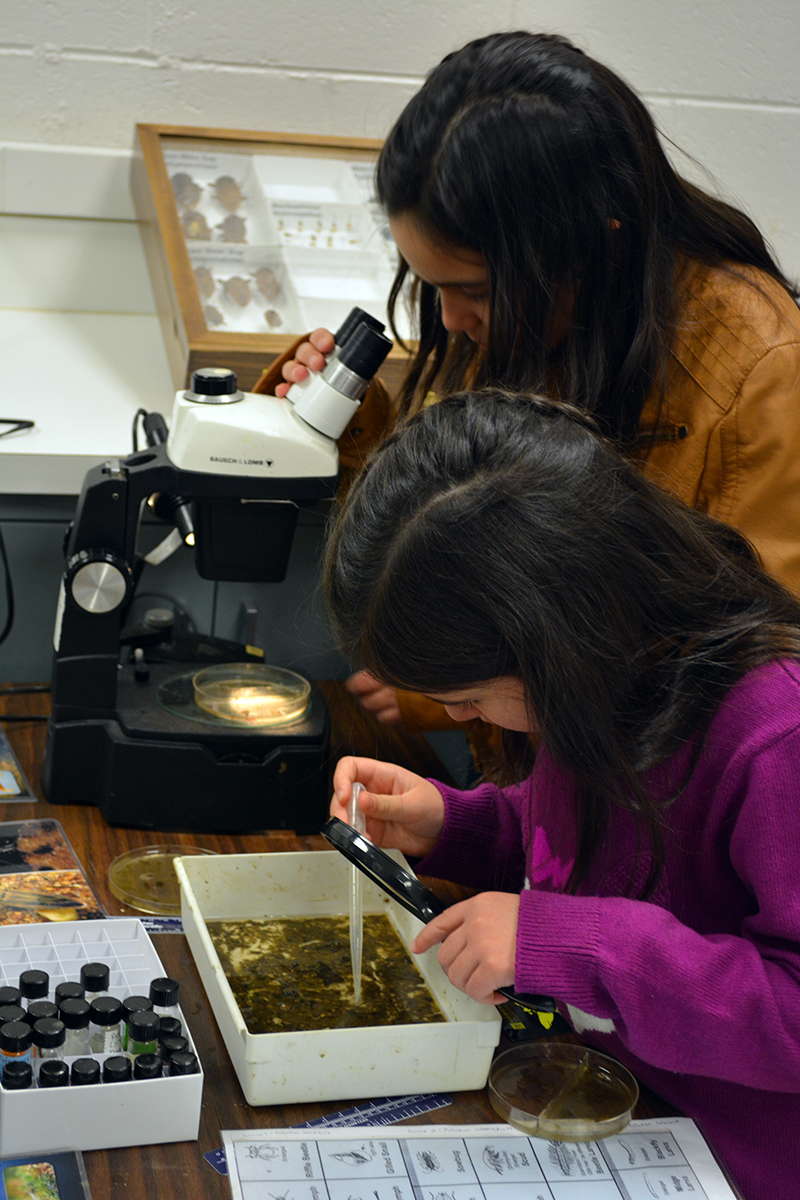 Learning about aquatic insect ecology at the Triplehorn Insect Collection.