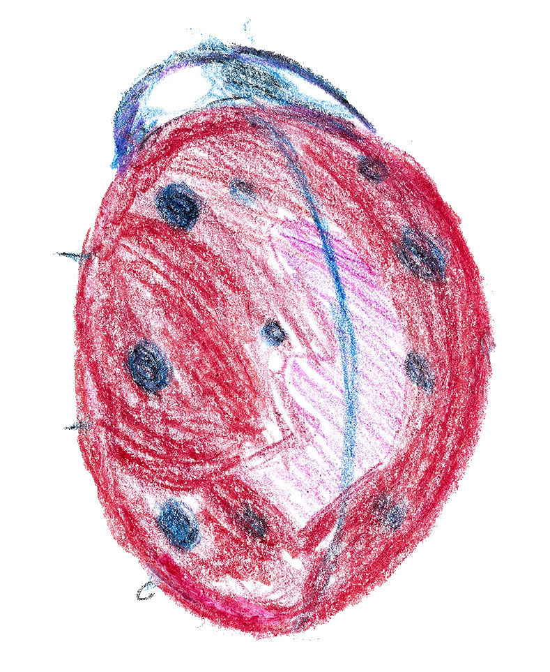 Ladybug, an insect drawing  from the 2015 Open House.