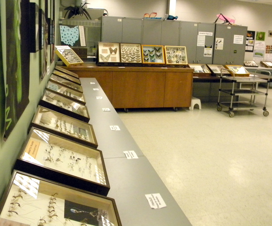 Partial view of the exhibit area in the Triplehorn Insect Collection the day before Open House.