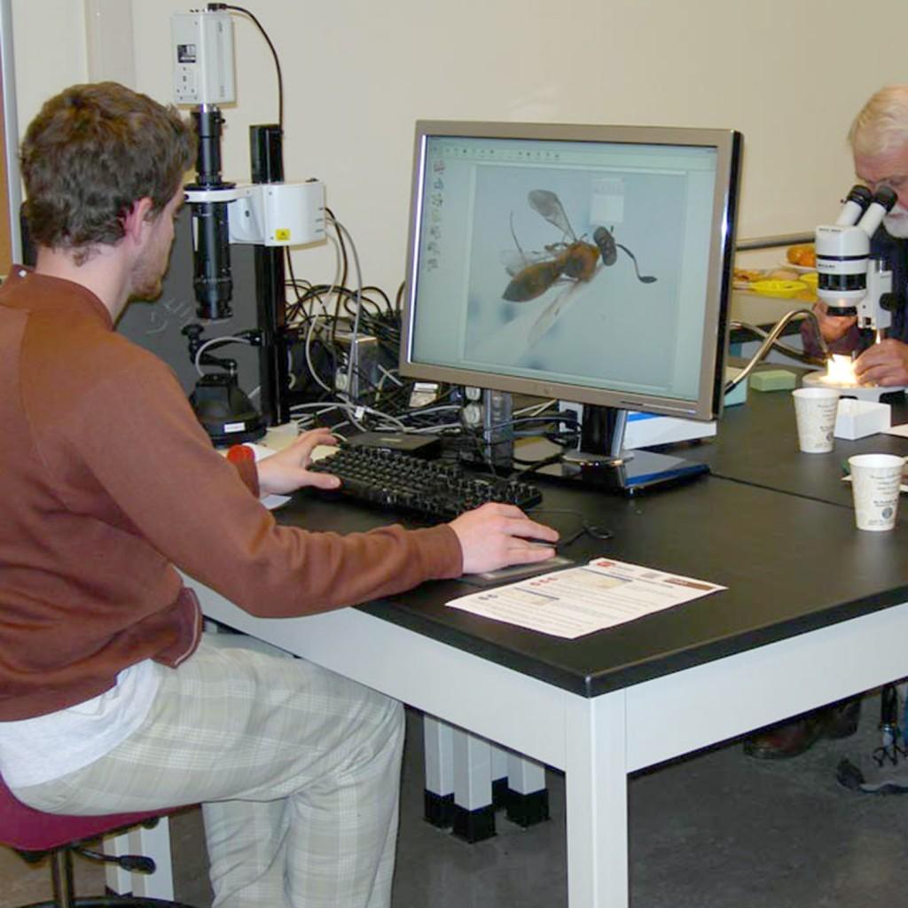 Joe Cora at work during Platygastroidea PBI workshop on specimen imaging in 2007.
