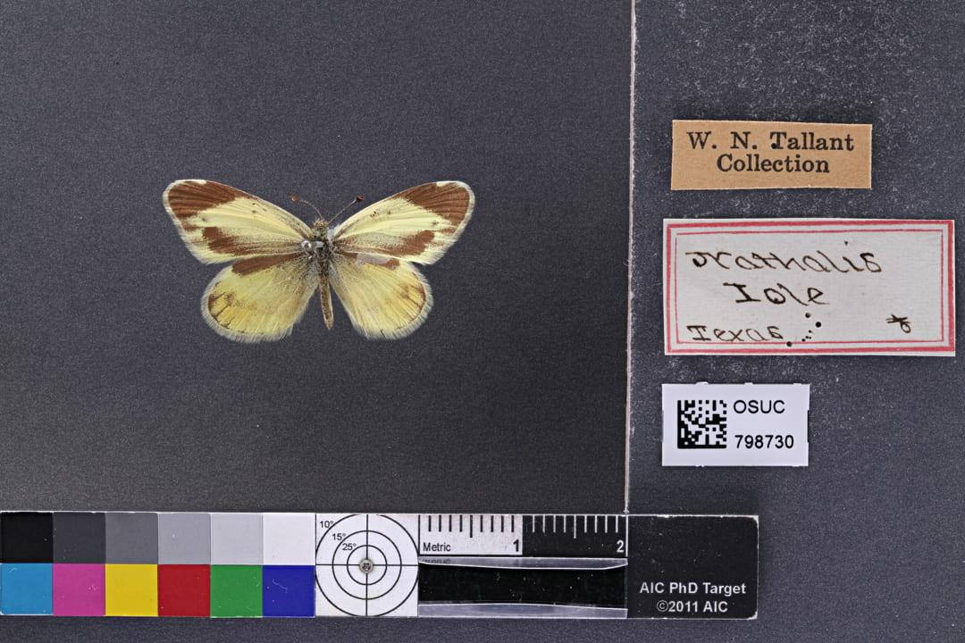 Photo of specimen OSUC 798730