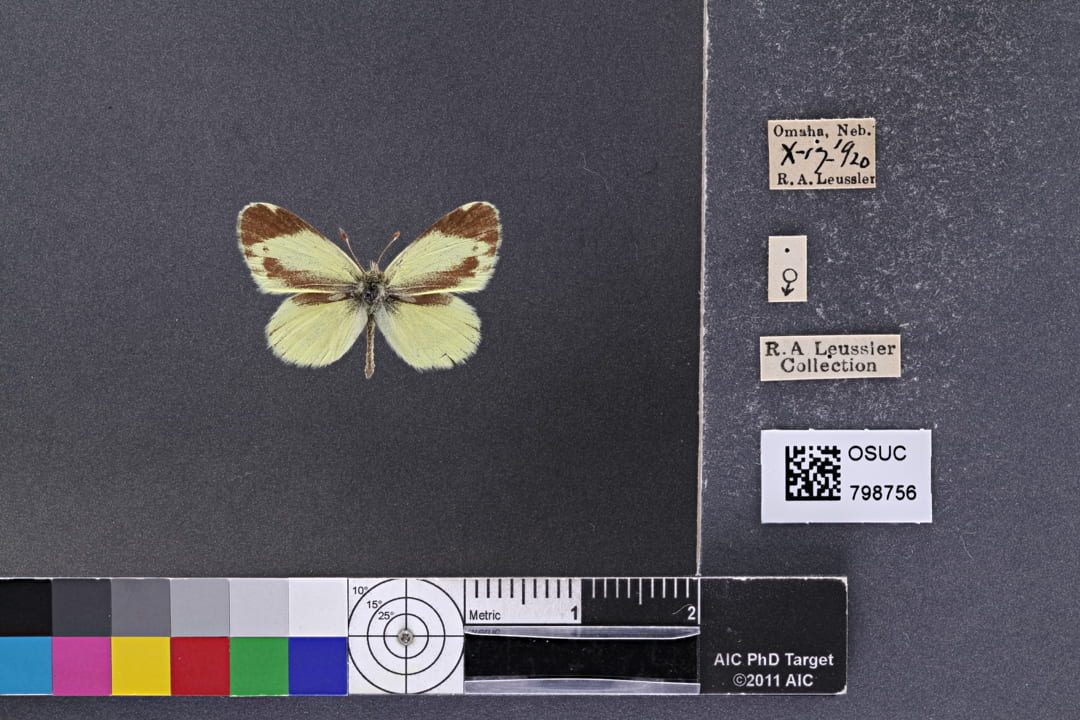 Photo of specimen OSUC 798756