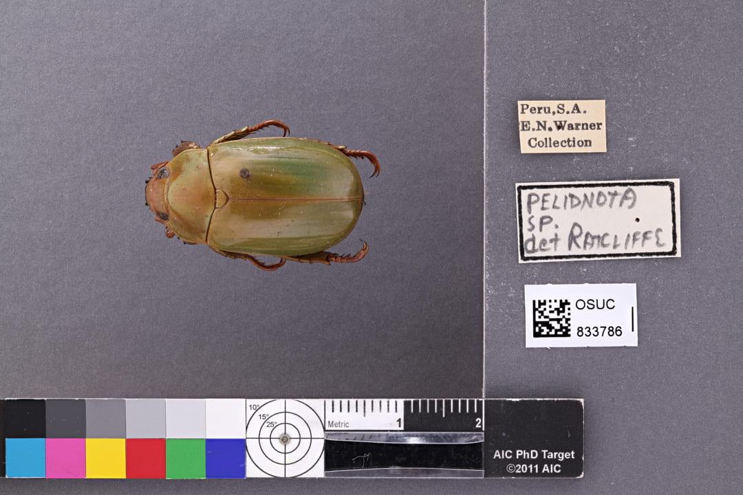 Photo of specimen OSUC 833786