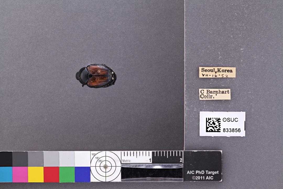 Photo of specimen OSUC 833856