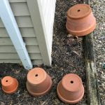 Upside down clay pots left in the backyard over the winter now house spider webs and insect eggs.