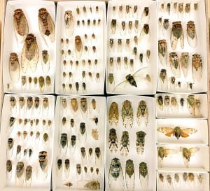 Specimens borrowed for study and recently returned to the collection