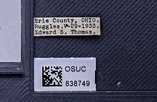 """Data transcription is the process by which the information on each specimen label is copied, word for word, into the collection's database. The transcription of the pictured label, for instance, would read """"Erie County, OHIO. Ruggles. V-29-1933. Edward S. Thomas."""""""