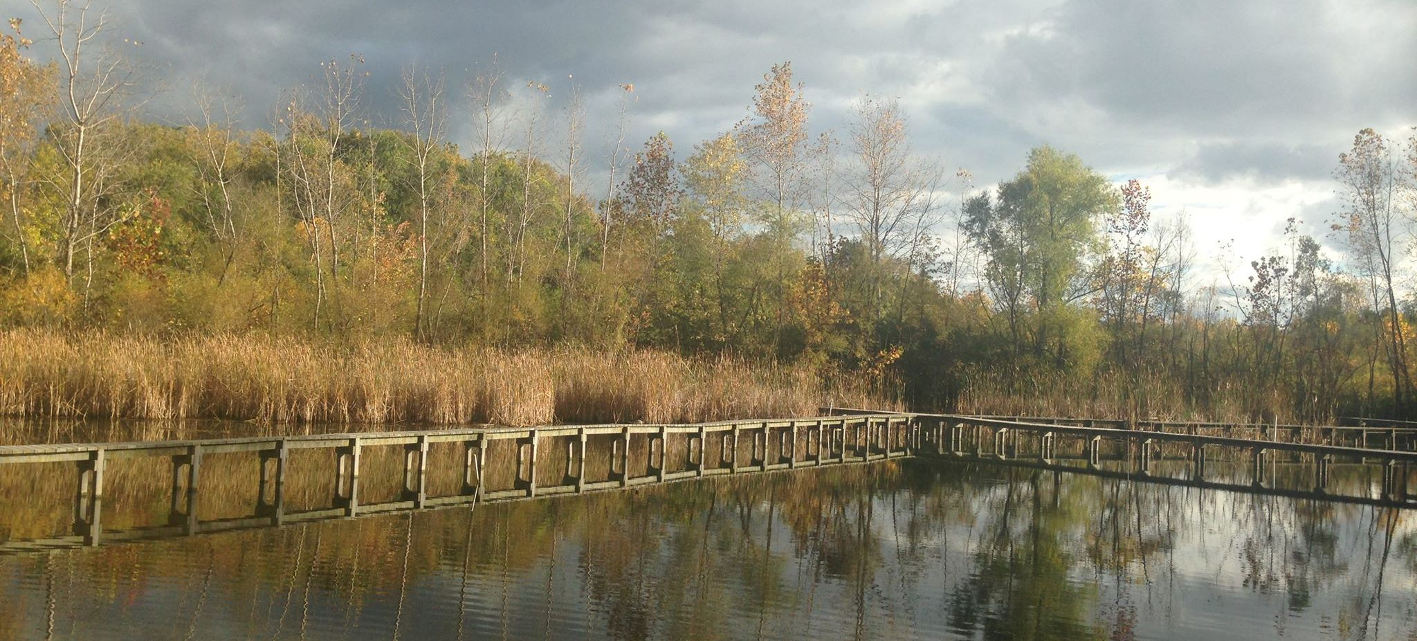 Experimental Wetland 1