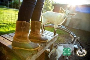 4-H er wearing Georgia Boots standing on a platform with a goat